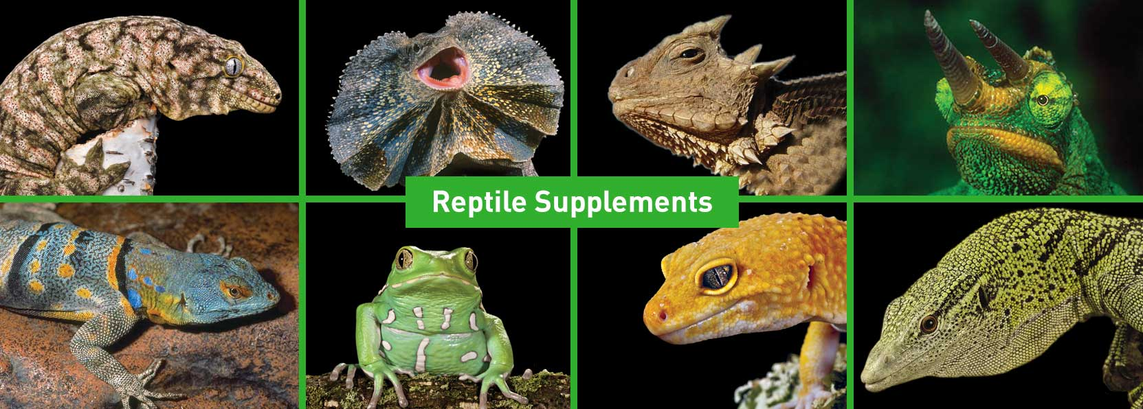 Repashy Ventures - Specialty Pet Products